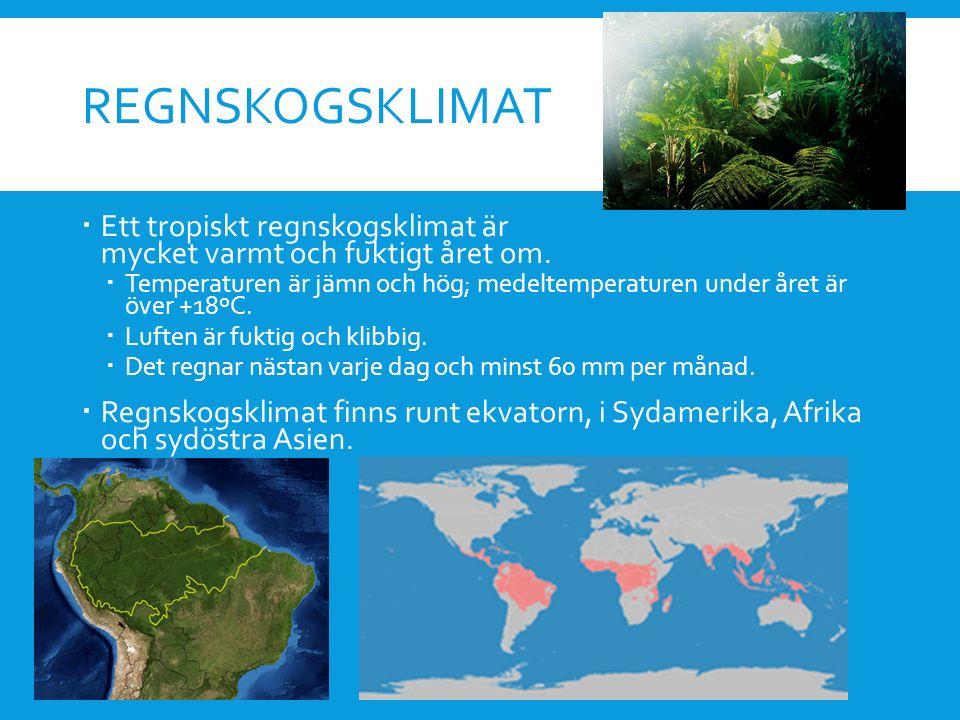 Regnskogsklimat Ett tropiskt regnskogsklimat är mycket varmt och fuktigt året om.