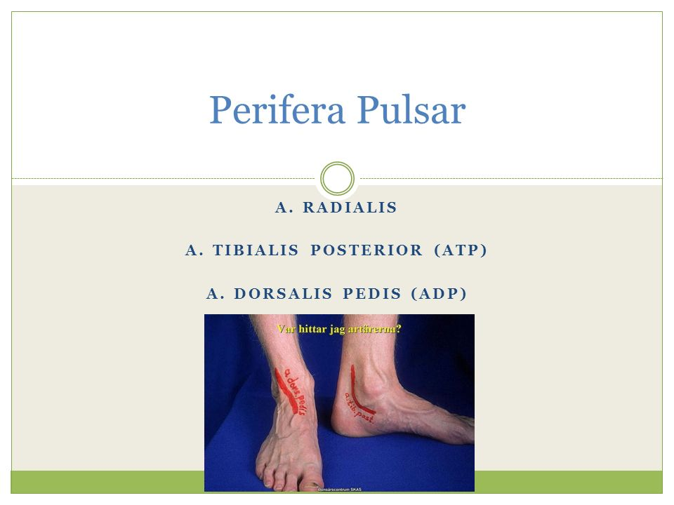 A. radialis A. tibialis posterior (ATP) A. dorsalis pedis (ADP)