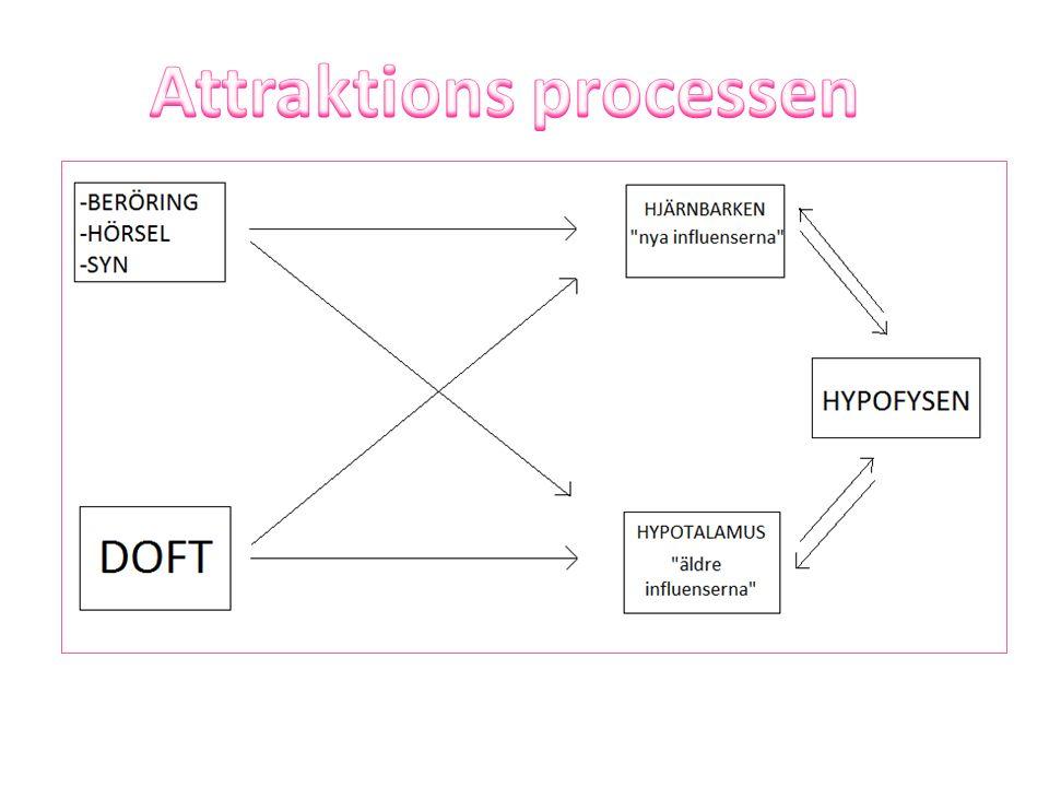 Attraktions processen