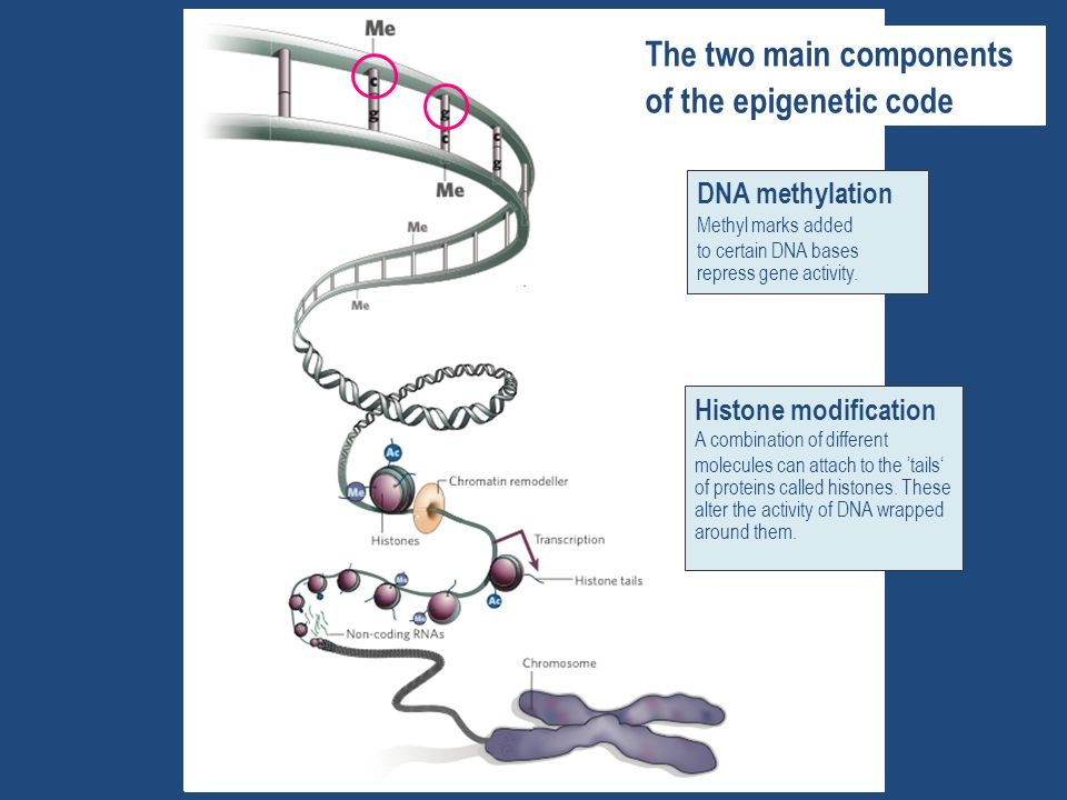The two main components of the epigenetic code
