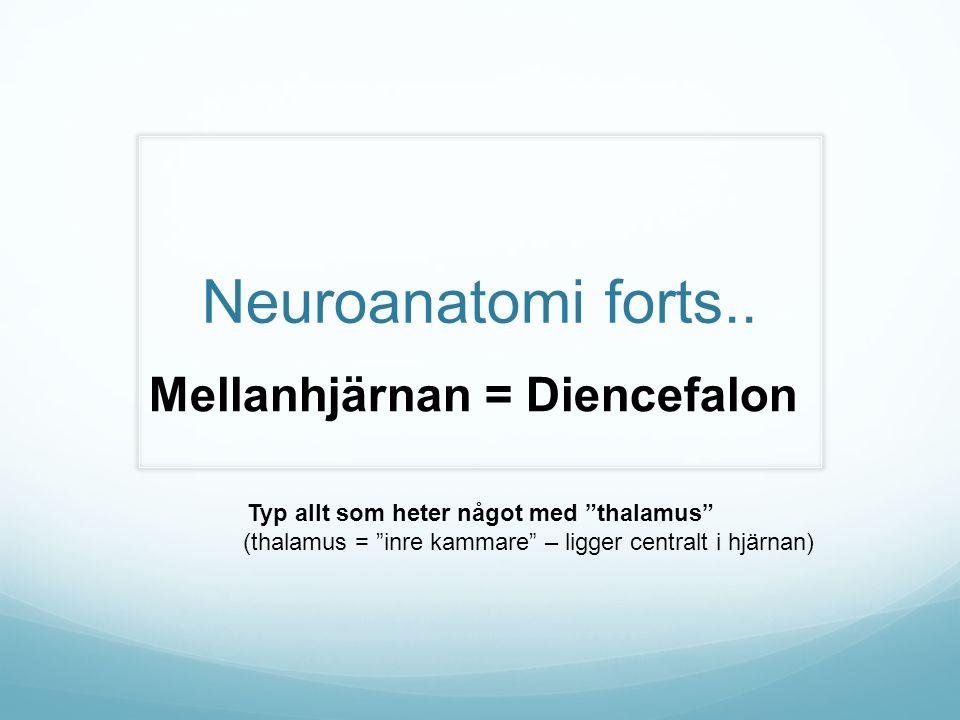Typ allt som heter något med thalamus