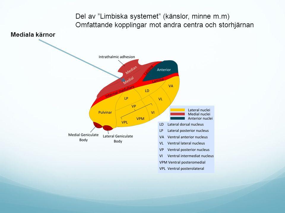Del av Limbiska systemet (känslor, minne m.m)