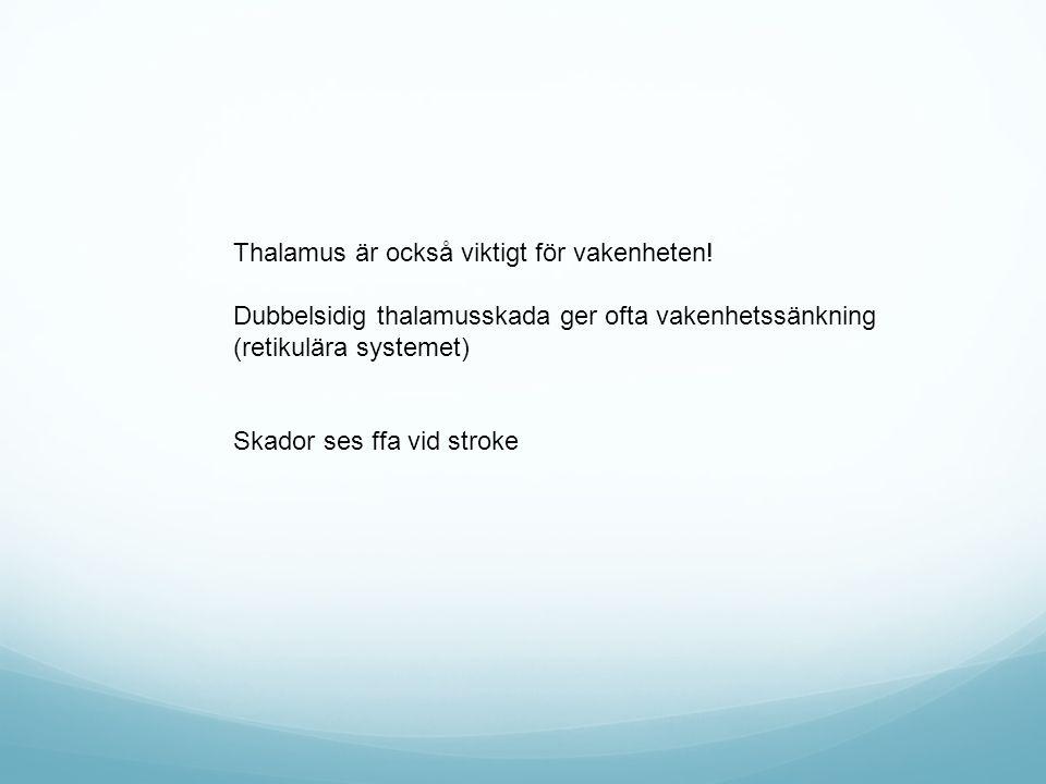 Thalamus är också viktigt för vakenheten!