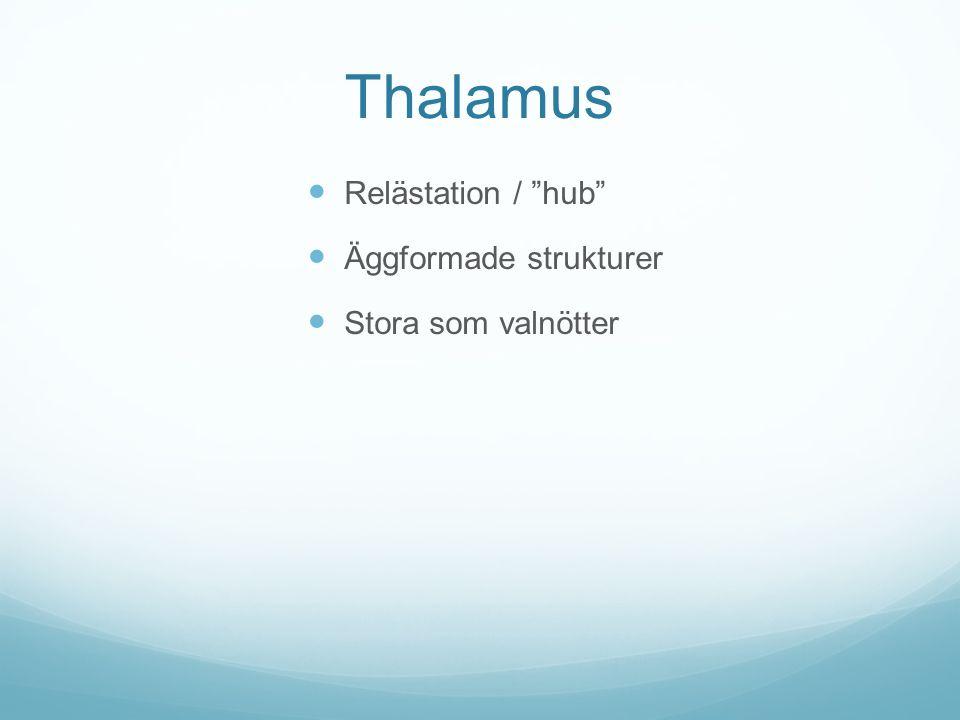 Thalamus Relästation / hub Äggformade strukturer Stora som valnötter