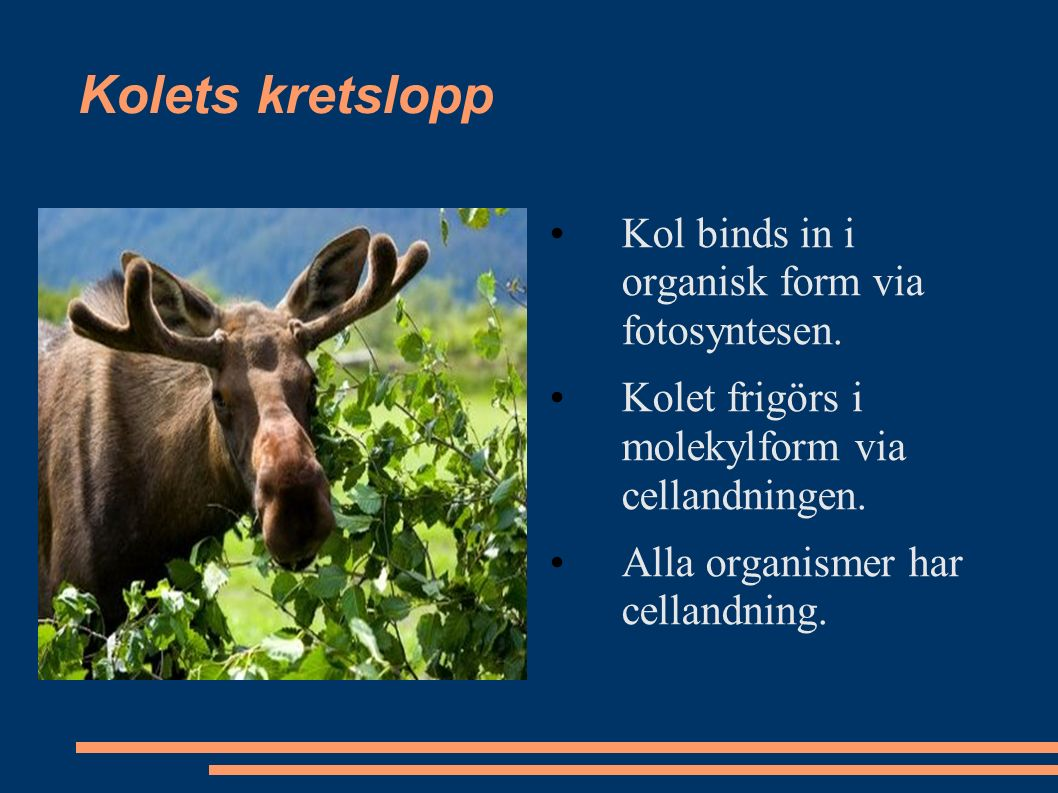 Kolets kretslopp Kol binds in i organisk form via fotosyntesen.