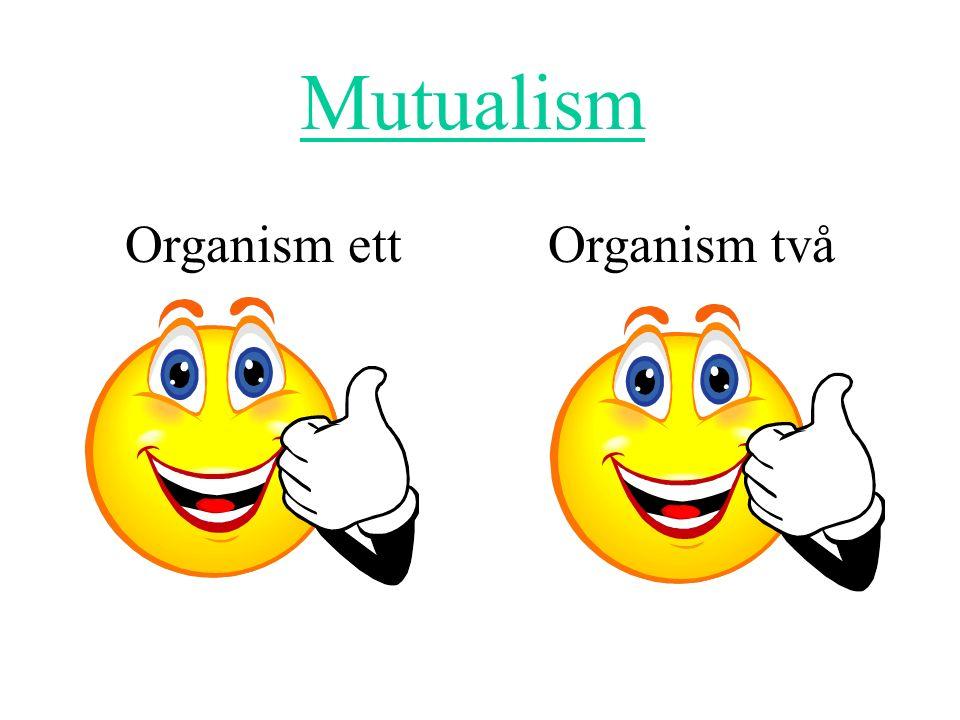 Organism ett Organism två