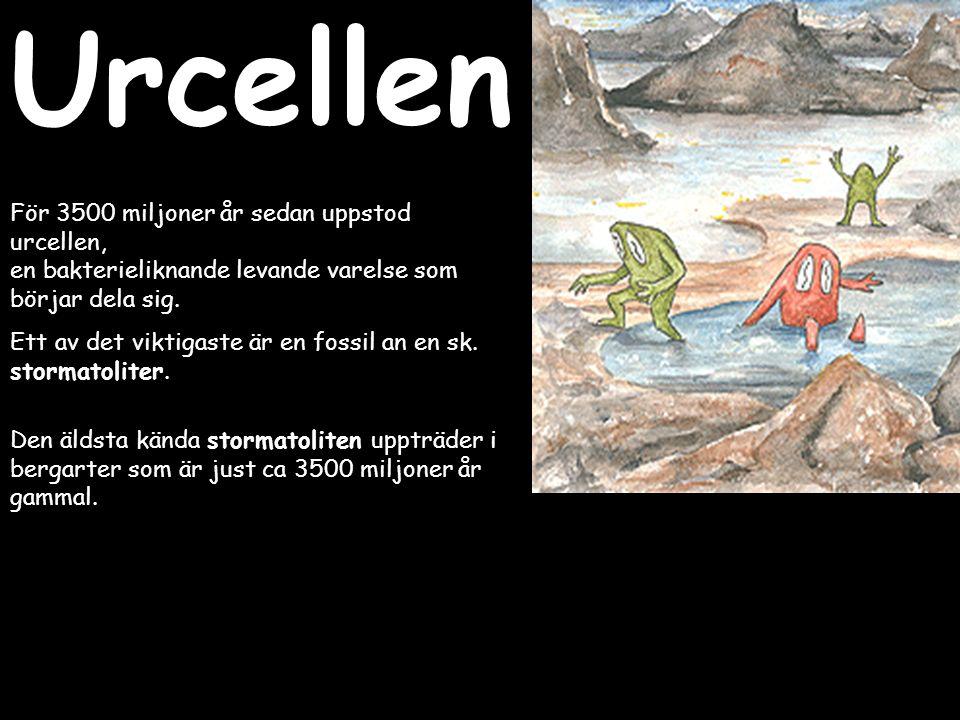 Urcellen För 3500 miljoner år sedan uppstod urcellen,