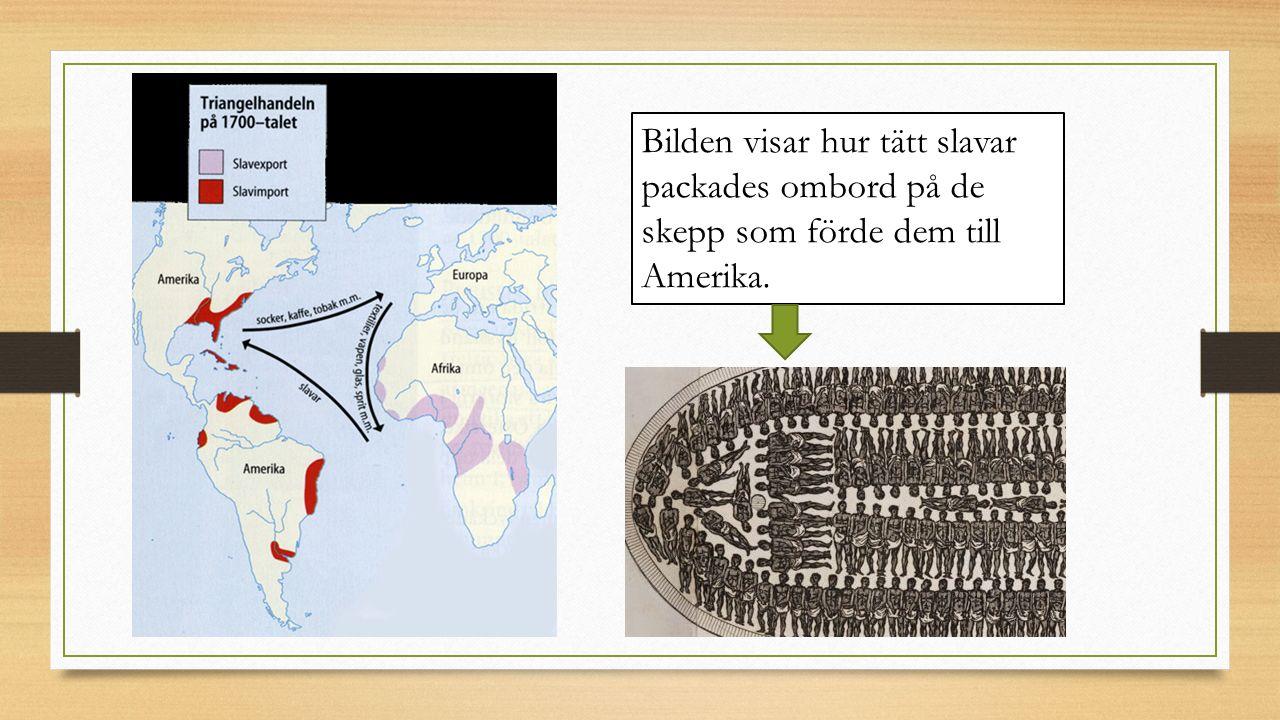 Bilden visar hur tätt slavar packades ombord på de skepp som förde dem till Amerika.