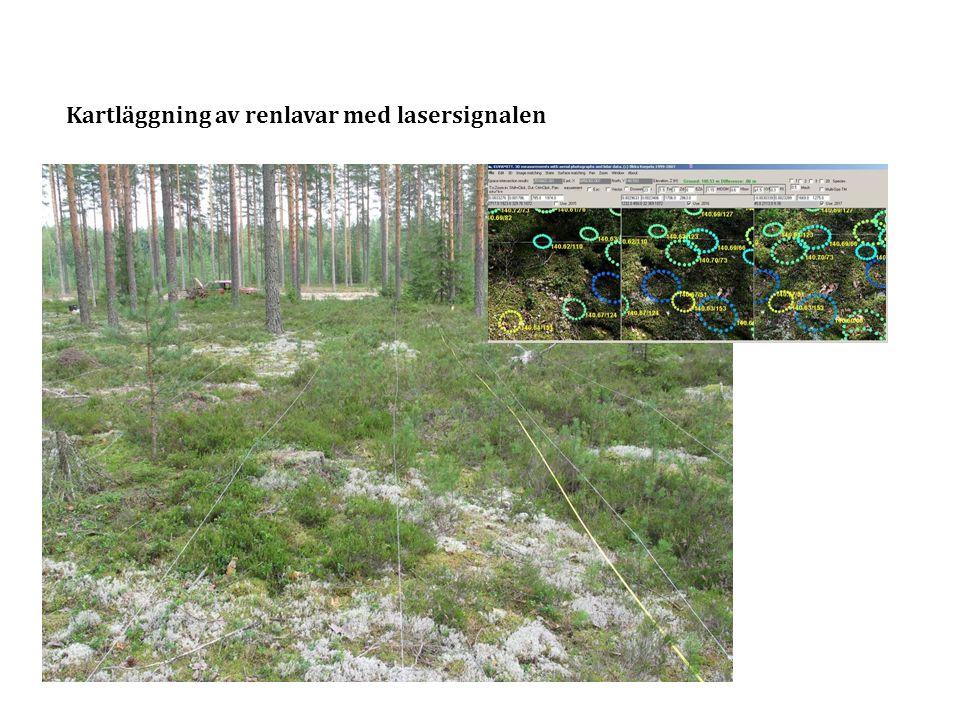 Kartläggning av renlavar med lasersignalen