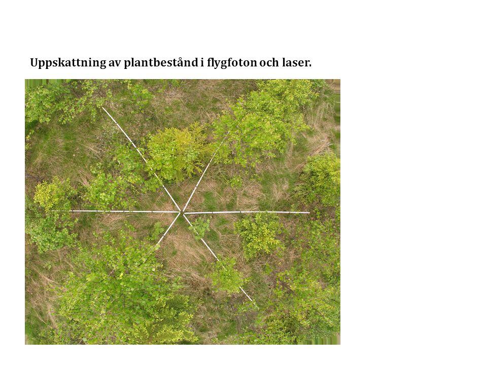 Uppskattning av plantbestånd i flygfoton och laser.