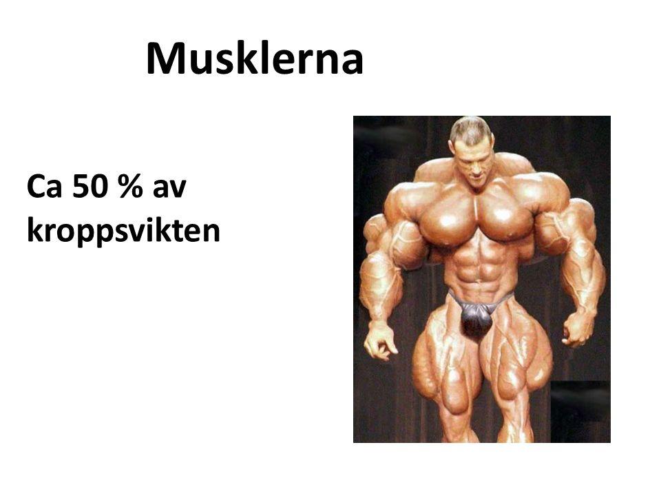 Musklerna Ca 50 % av kroppsvikten