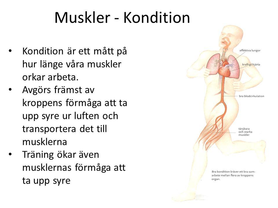 Muskler - Kondition Kondition är ett mått på hur länge våra muskler orkar arbeta.