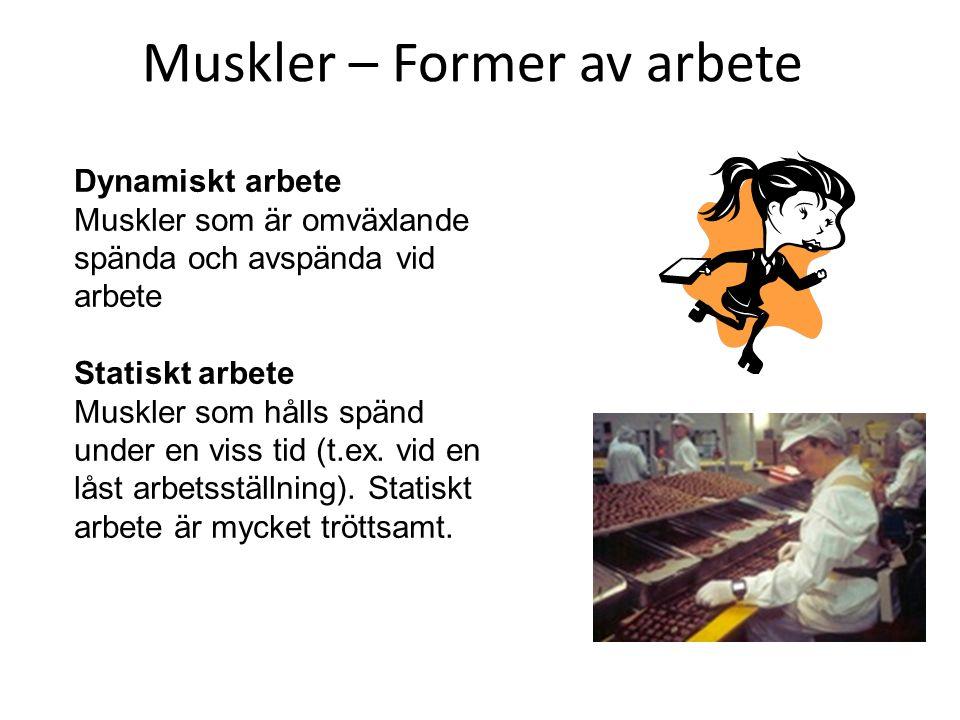 Muskler – Former av arbete