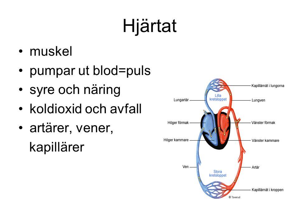 Hjärtat muskel pumpar ut blod=puls syre och näring