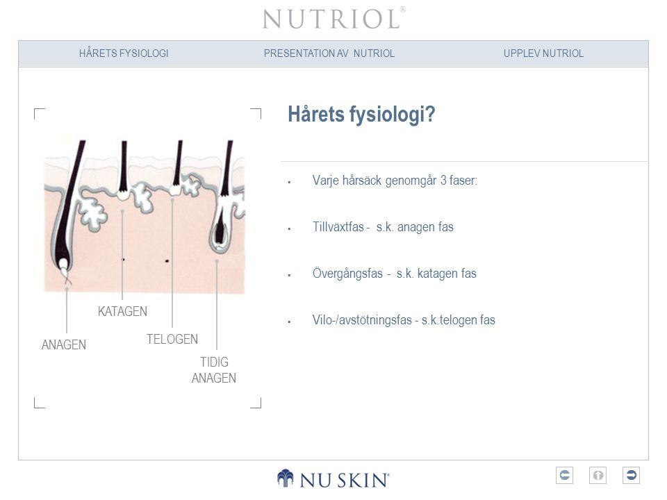 Hårets fysiologi Varje hårsäck genomgår 3 faser: