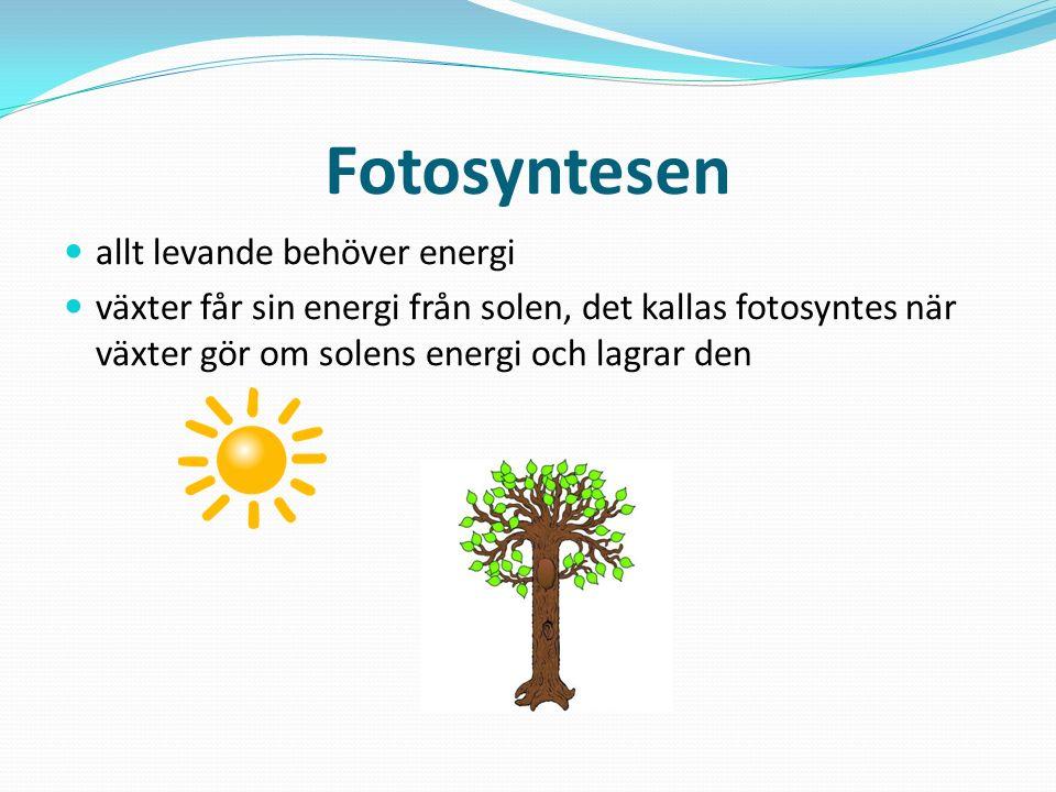 Fotosyntesen allt levande behöver energi