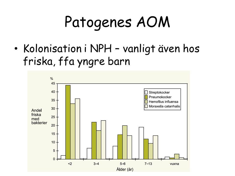 Patogenes AOM Kolonisation i NPH – vanligt även hos friska, ffa yngre barn