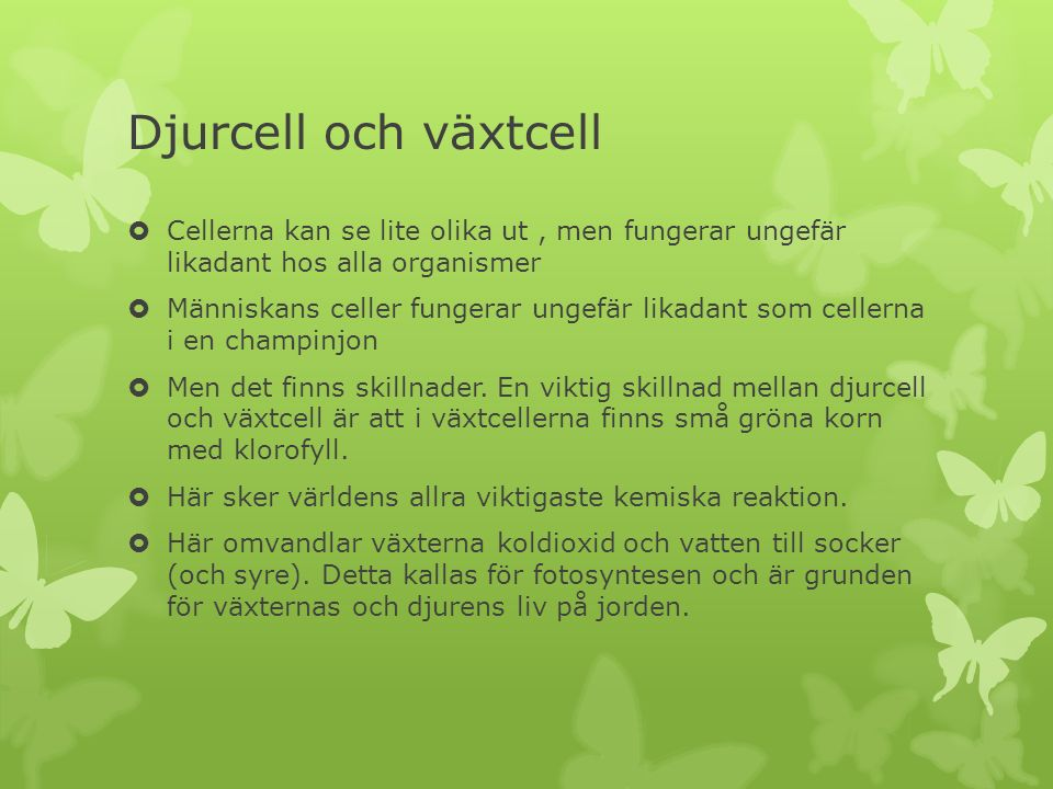 Djurcell och växtcell Cellerna kan se lite olika ut , men fungerar ungefär likadant hos alla organismer.