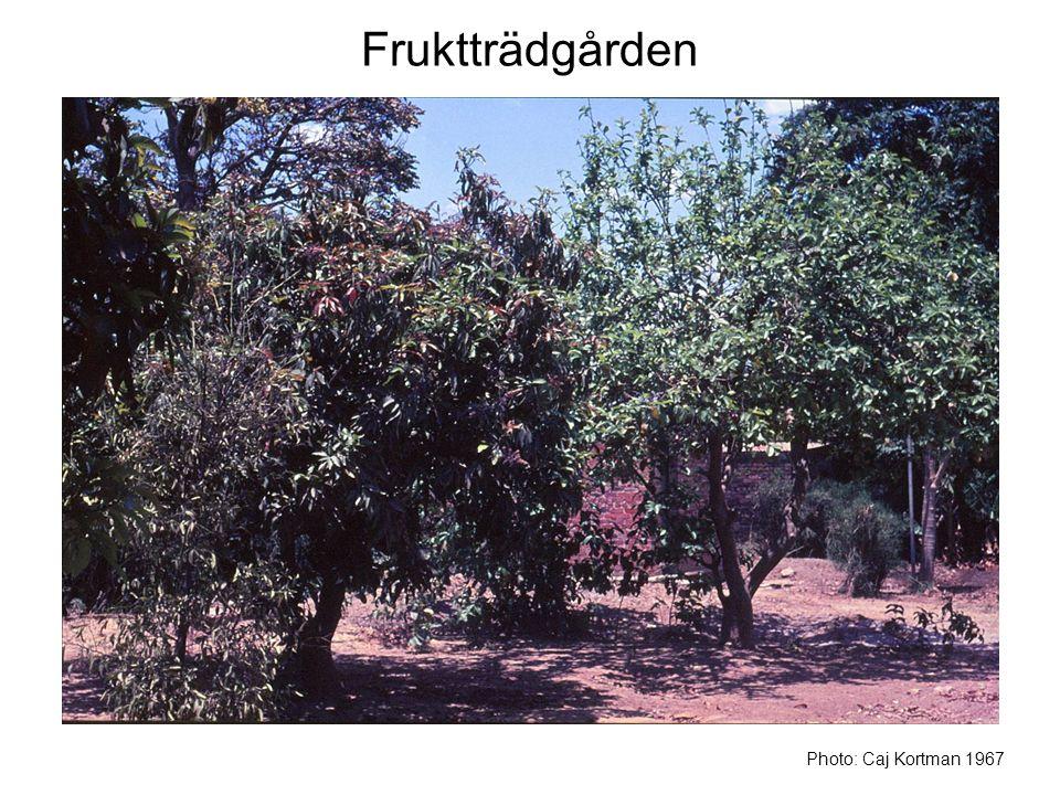 Fruktträdgården