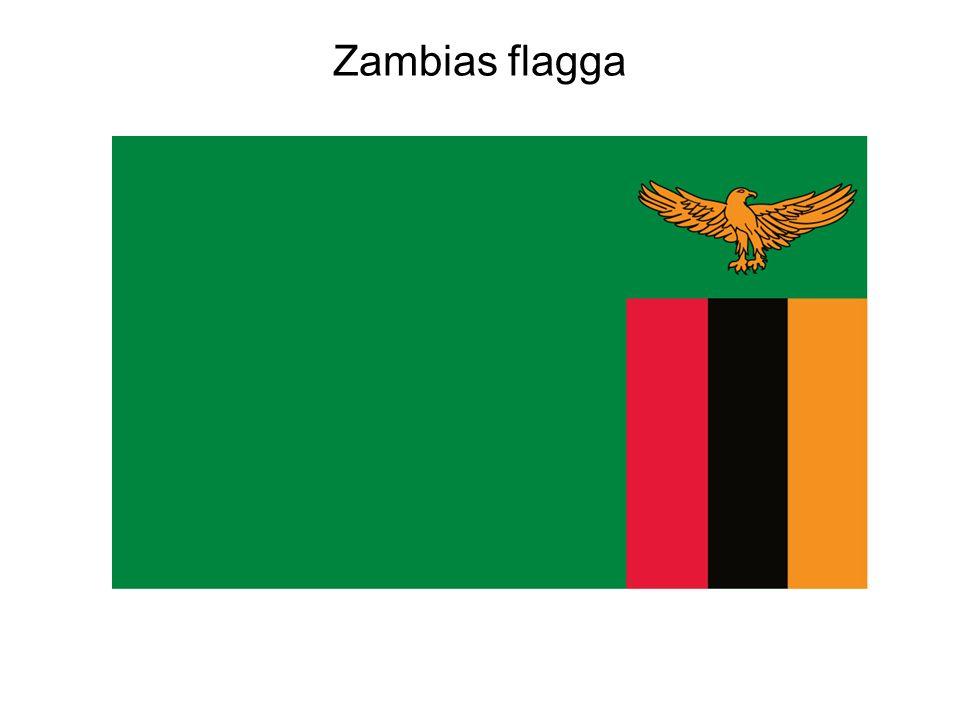 Zambias flagga Zambias flagga