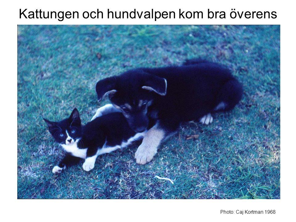 Kattungen och hundvalpen kom bra överens