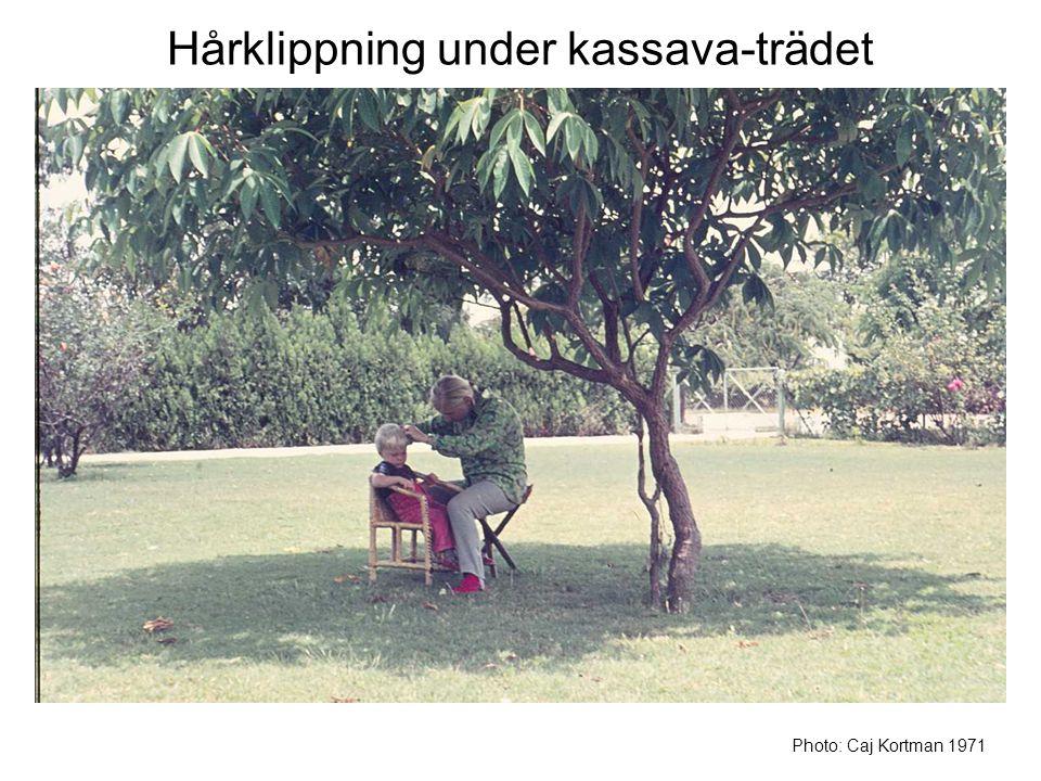 Hårklippning under kassava-trädet