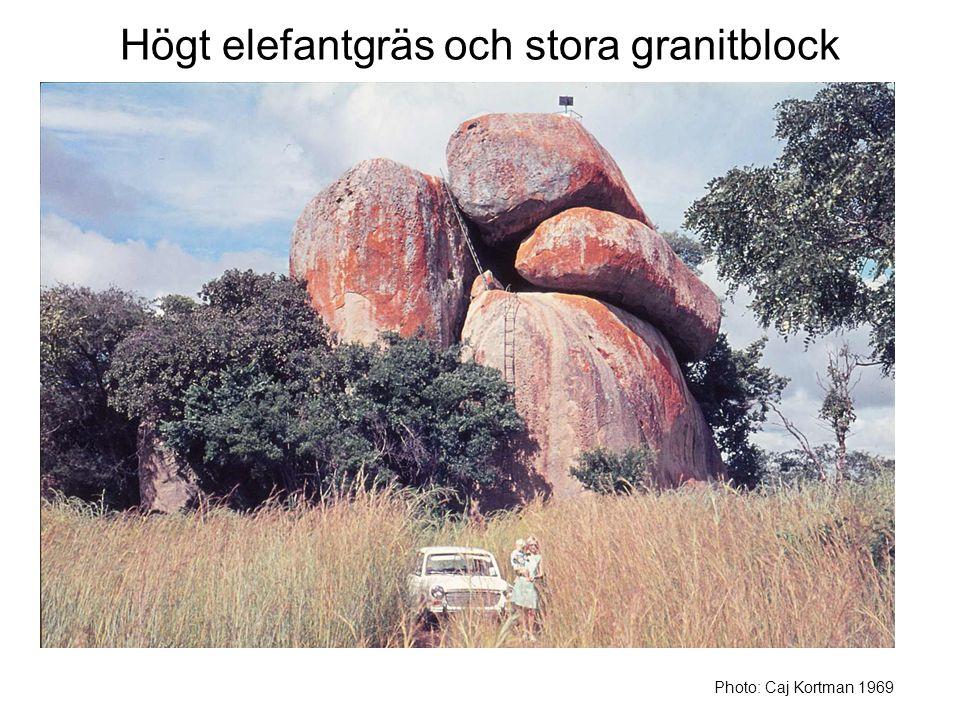 Högt elefantgräs och stora granitblock