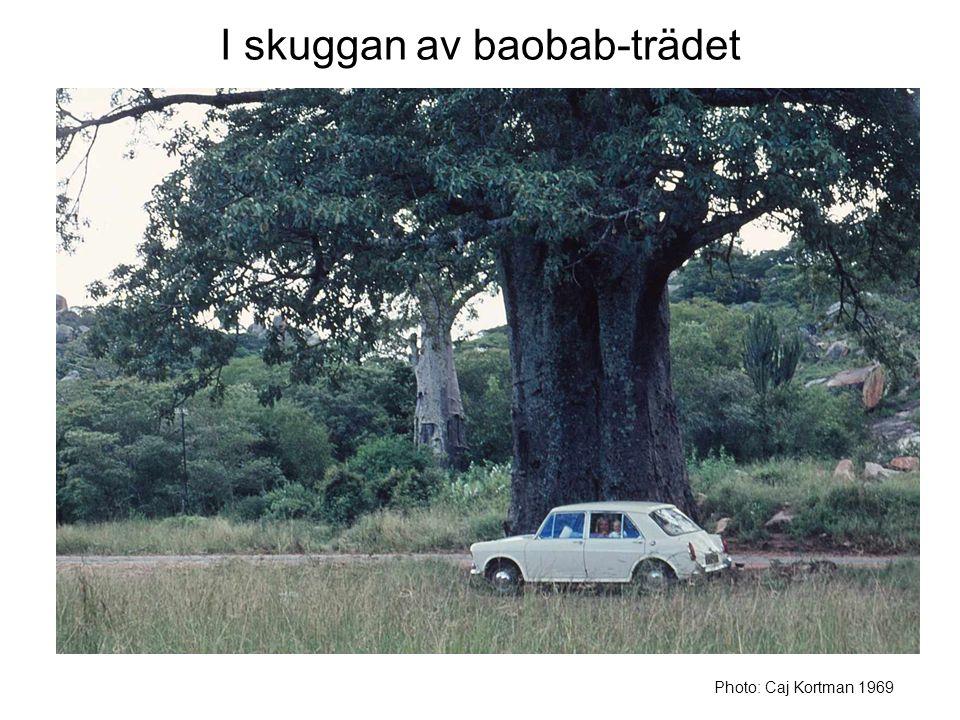 I skuggan av baobab-trädet