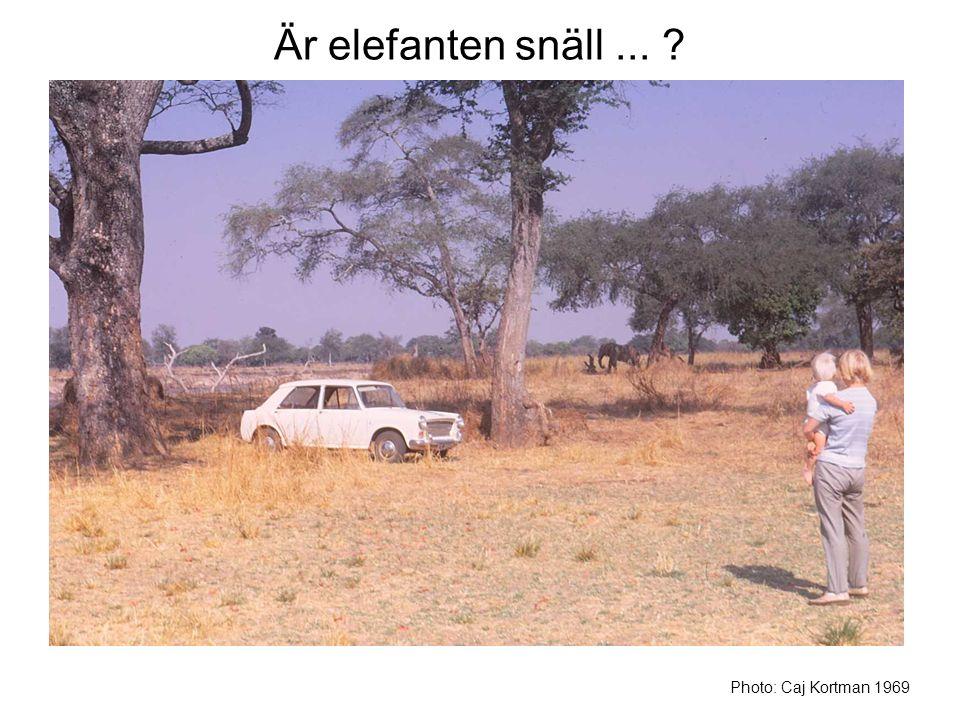 Är elefanten snäll ... Photo: Caj Kortman 1969