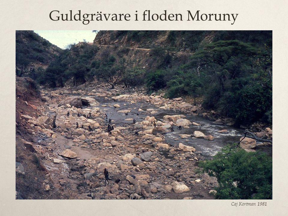 Guldgrävare i floden Moruny