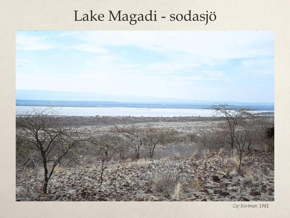 Lake Magadi - sodasjö Caj Kortman 1981