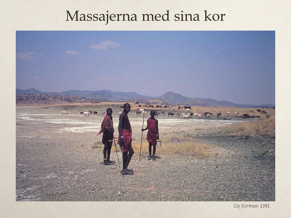Massajerna med sina kor