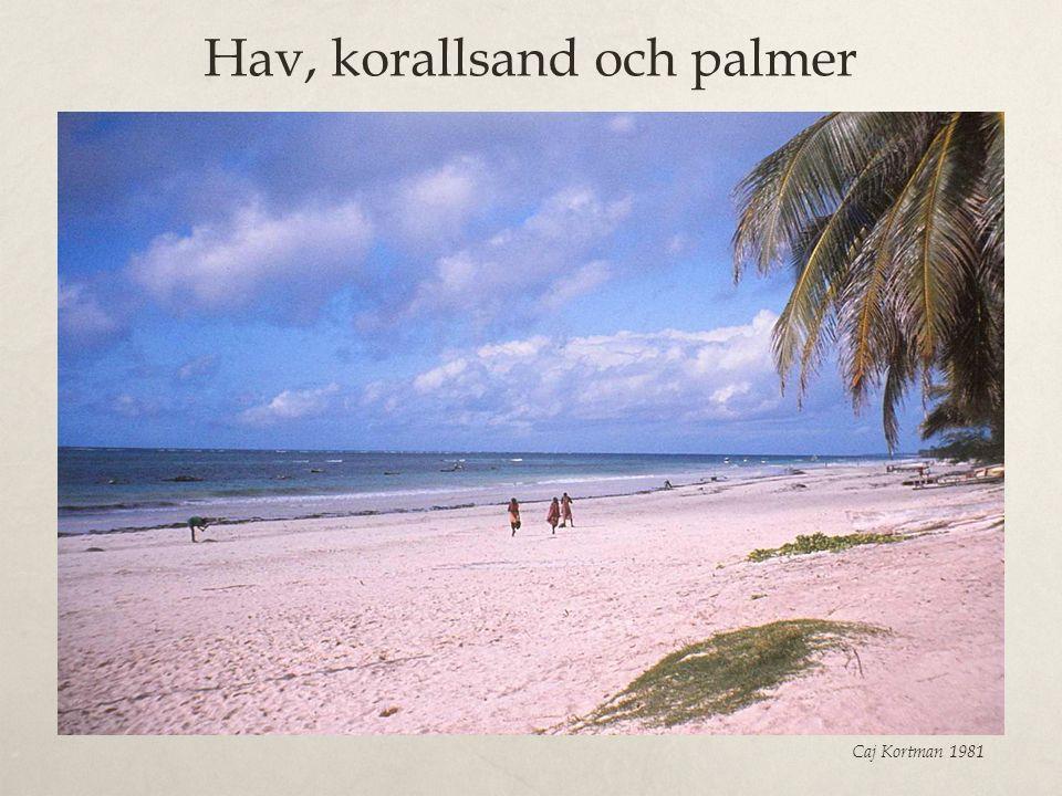 Hav, korallsand och palmer