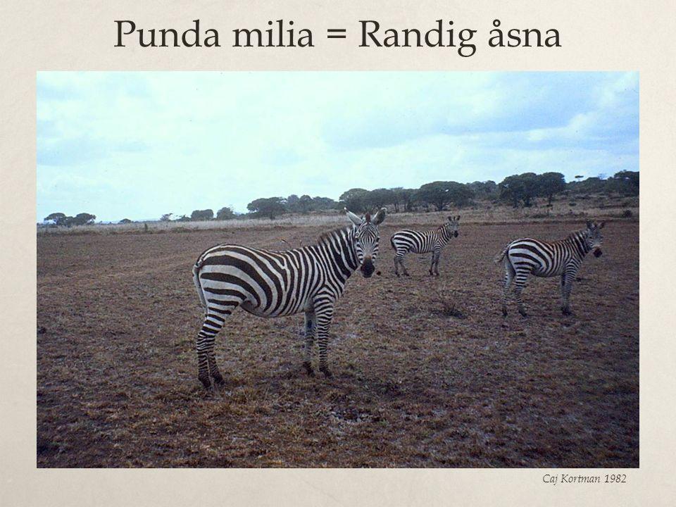 Punda milia = Randig åsna