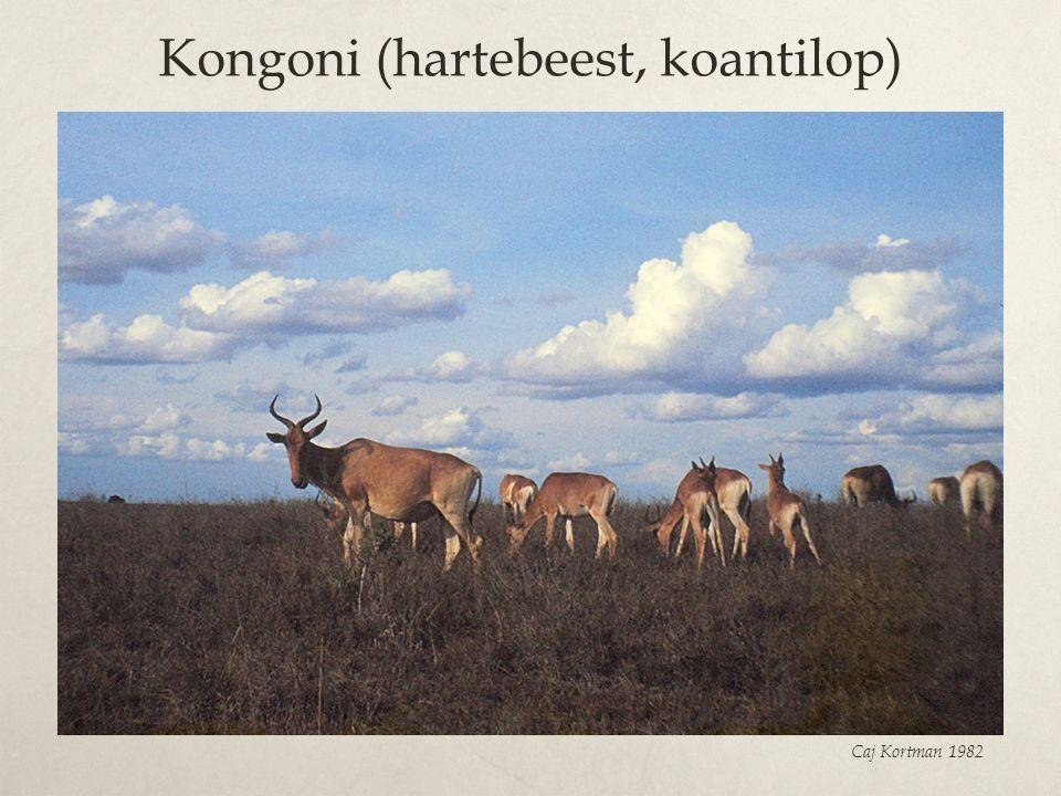 Kongoni (hartebeest, koantilop)