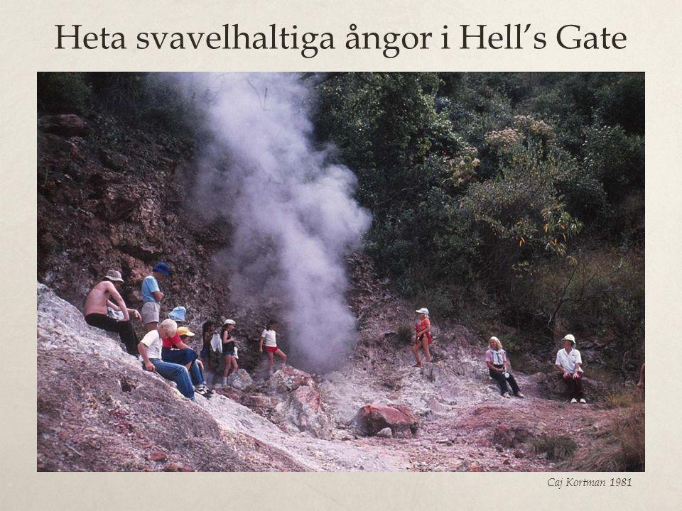 Heta svavelhaltiga ångor i Hell's Gate