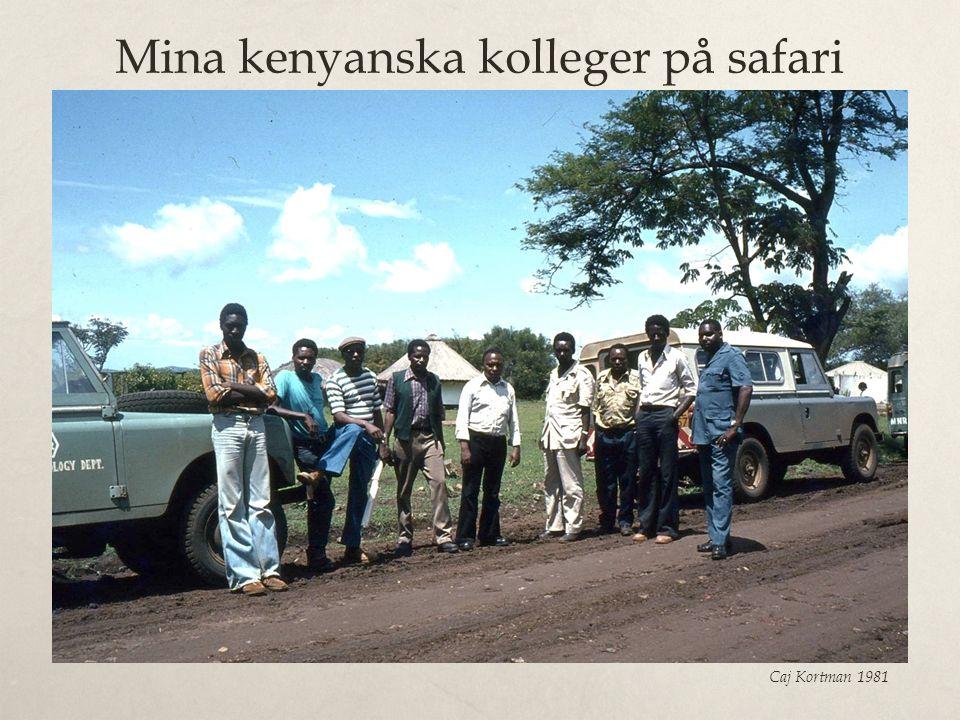 Mina kenyanska kolleger på safari