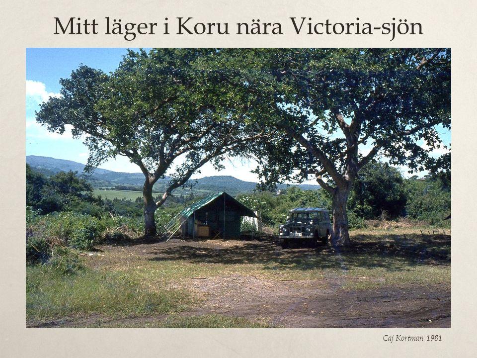 Mitt läger i Koru nära Victoria-sjön