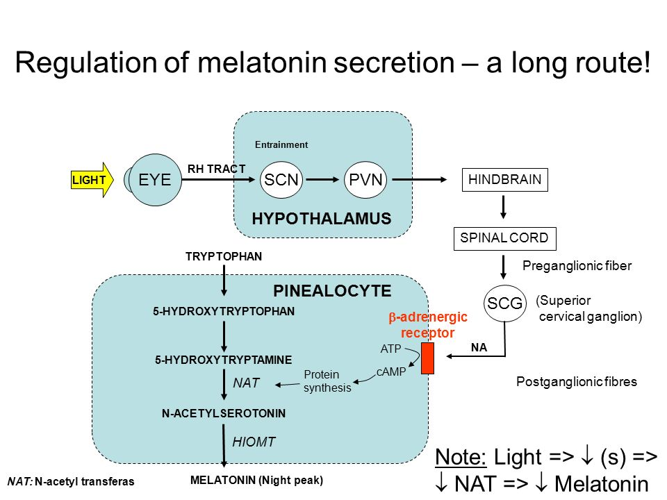 Regulation of melatonin secretion – a long route!