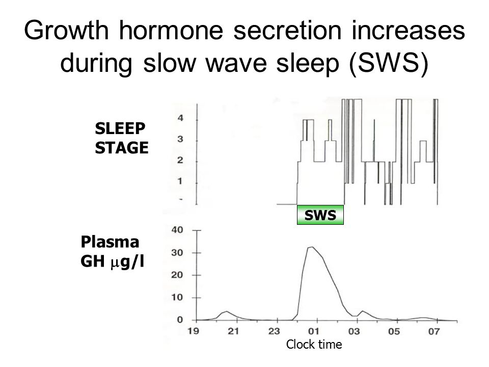 Growth hormone secretion increases during slow wave sleep (SWS)