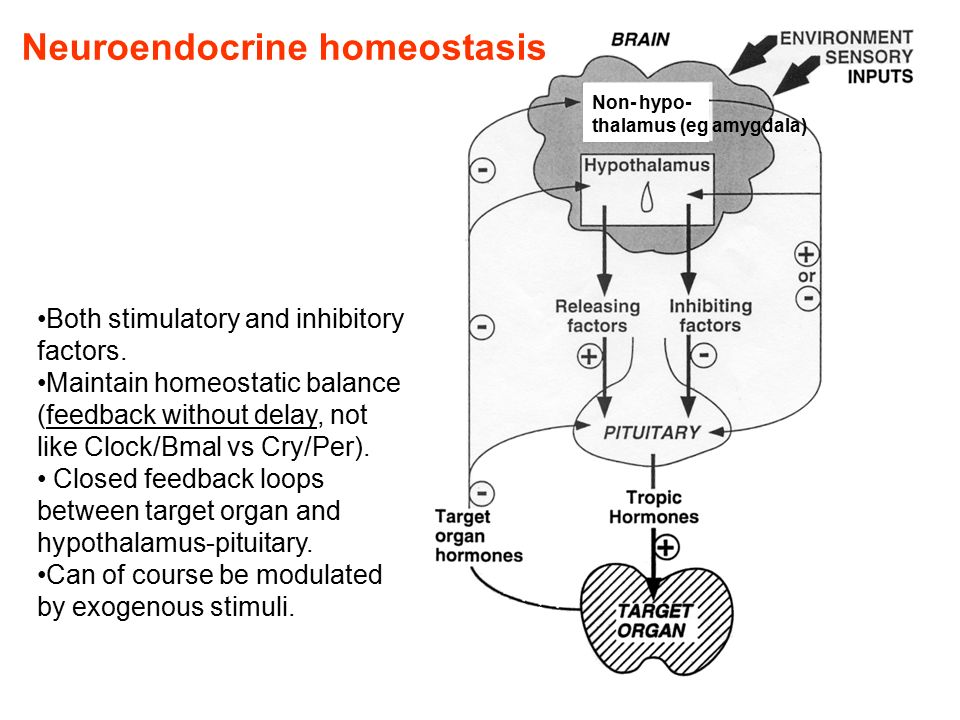 Neuroendocrine homeostasis