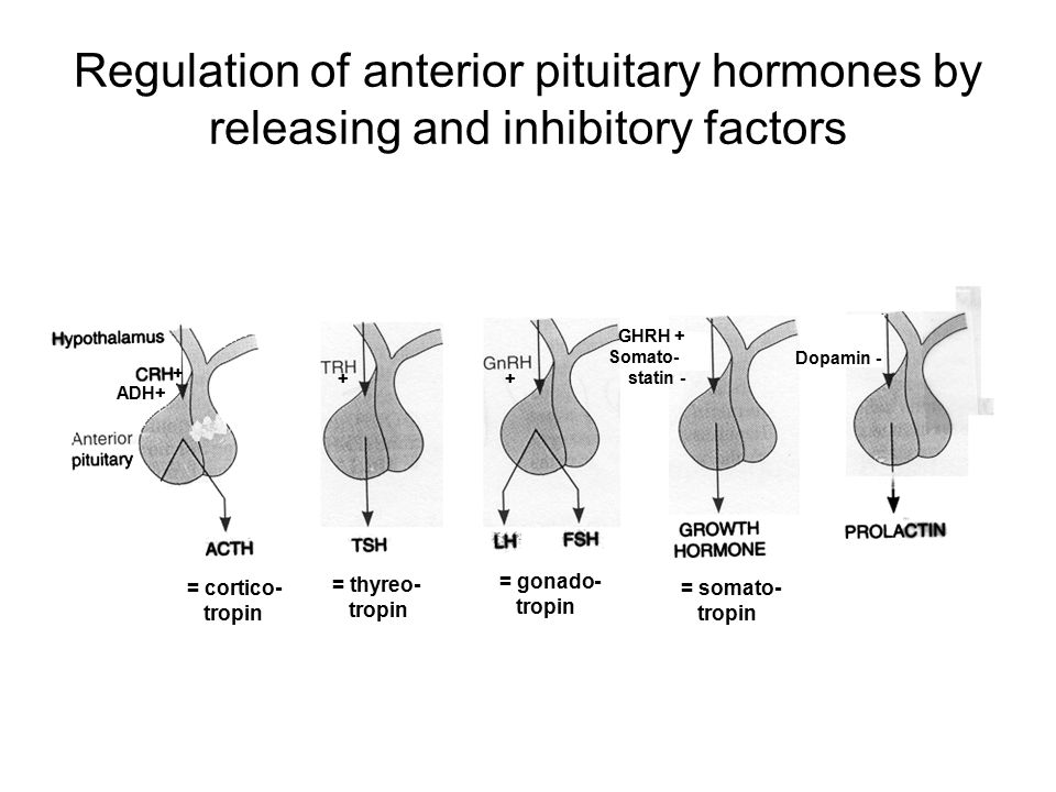 Regulation of anterior pituitary hormones by releasing and inhibitory factors