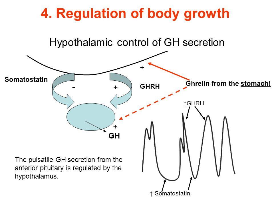 Hypothalamic control of GH secretion