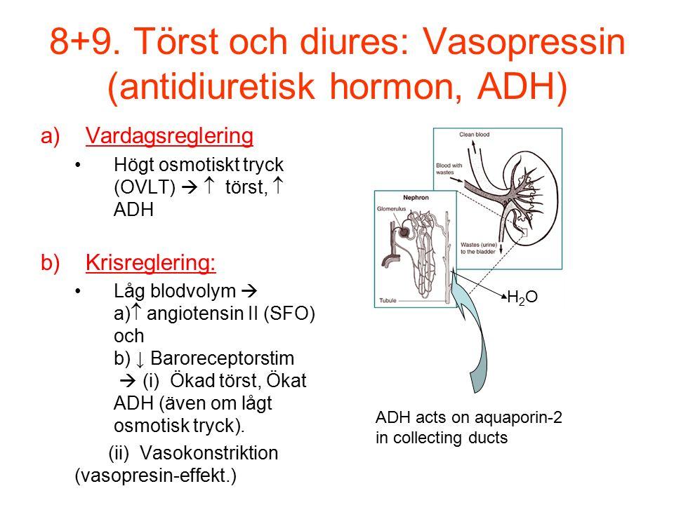 8+9. Törst och diures: Vasopressin (antidiuretisk hormon, ADH)