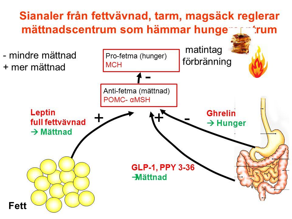 Sianaler från fettvävnad, tarm, magsäck reglerar mättnadscentrum som hämmar hungercentrum