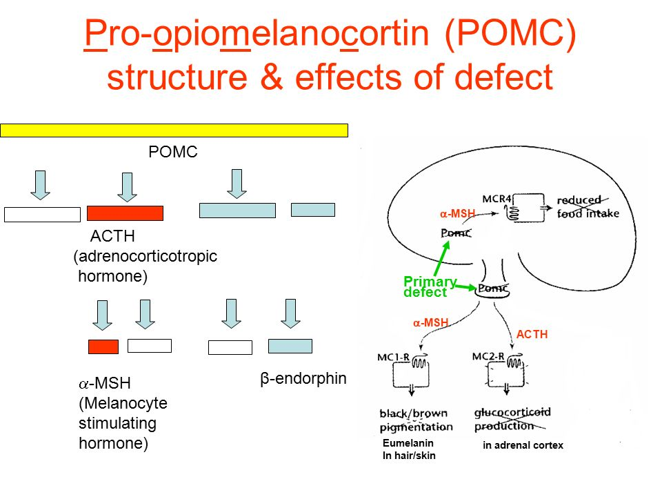Pro-opiomelanocortin (POMC) structure & effects of defect