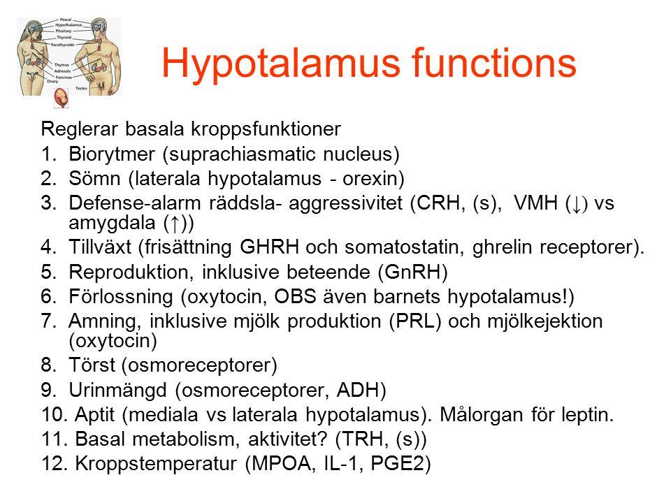 Hypotalamus functions