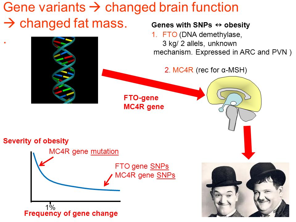 Gene variants  changed brain function  changed fat mass. .