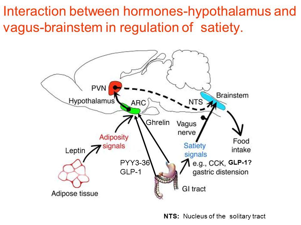 Interaction between hormones-hypothalamus and vagus-brainstem in regulation of satiety.