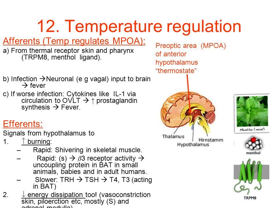 12. Temperature regulation